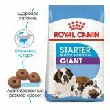 Royal Canin (Роял Канин) Giant Starter сухой корм для щенков гигантских пород до 2 месяцев, беременных собак гигантских пород